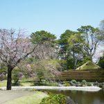 【受付終了】3/30(金) ・3/31(土) 【限定】紅葉山庭園茶室にて桜のランチ会 開催