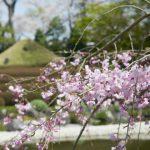 【受付終了】3/25(木) 、3/26(金)、3/27(土)紅葉山庭園茶室にて「桜のランチ会」開催!!